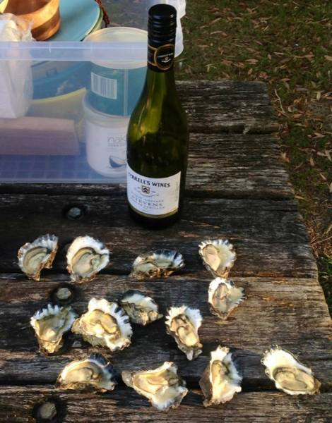 Semillon & oysters