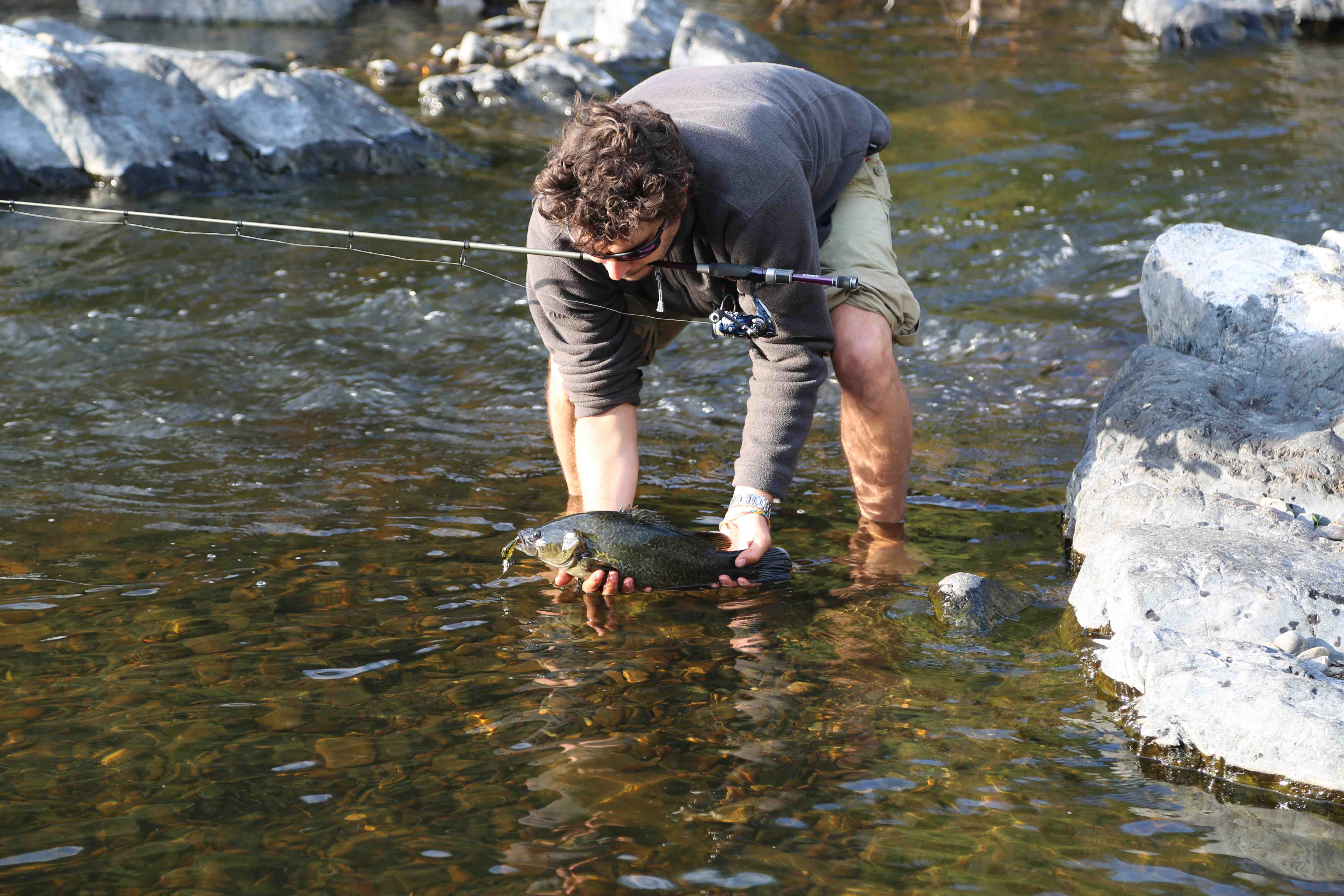 how to catch freshwater ling cod