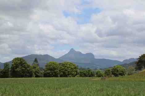 mt warning country