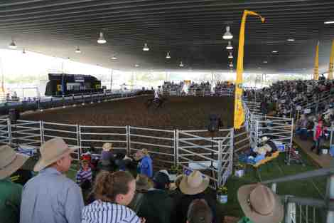 Australian stock horse sales- Dalby