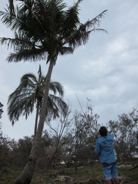 Coconut wrangling