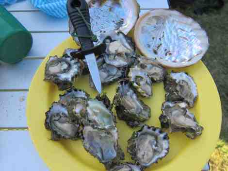 few oysters we collected