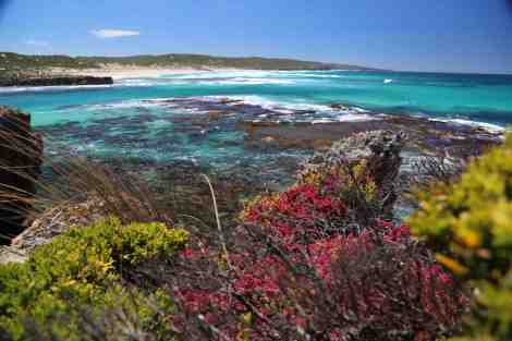 Hanson Bay headland plants
