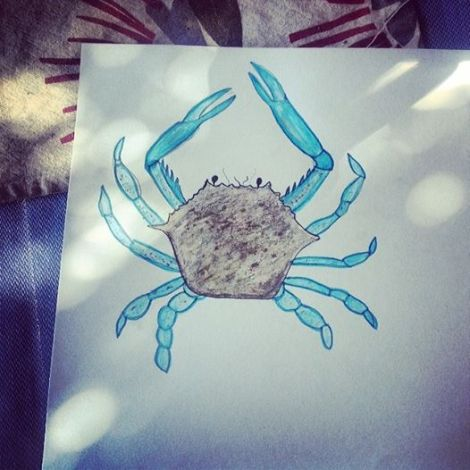 blue swimmer crab drawing